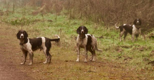 Quiet Dogs